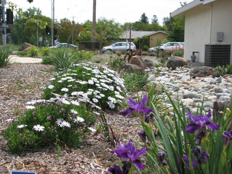 snowden-landscape-design-water-wise-demo-garden-3